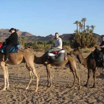 Camel trek into the Sahara