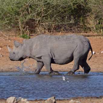 Beautiful rhino