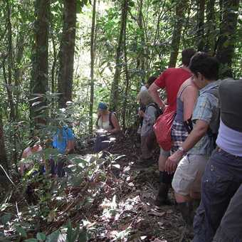 Walking the Ocelot trail at the Esquinas lodge,Golfito