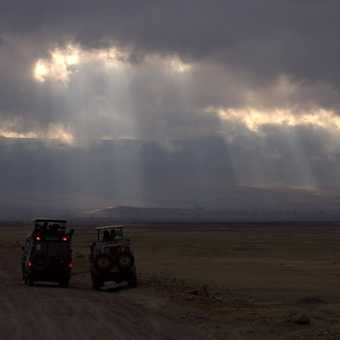 Cheetah - Ngorongoro Crater