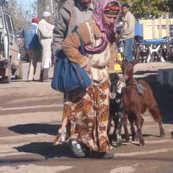 Daily Life in the Middle Atlas