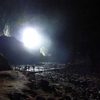 Bats leaving the cave