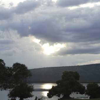 Steppe Eagle, Mburo.
