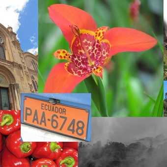 Collage of Ecuador experiences