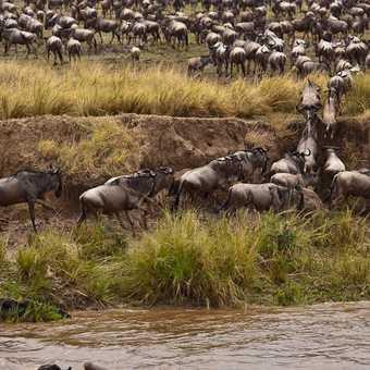 Hazardous Mara River Crossing