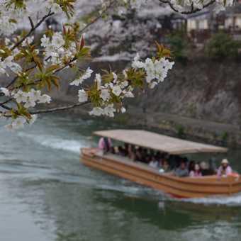 blossom boat