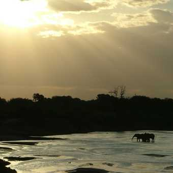 Elephant crossing at sunset