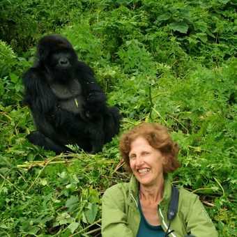 My David Attenborough Impression