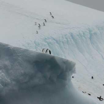 Adeles on Iceberg