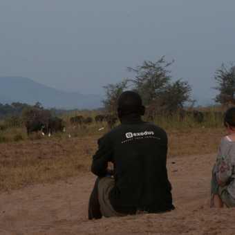 Watching buffalo at dusk