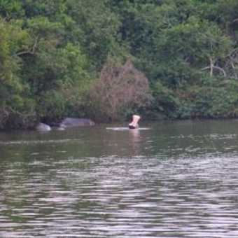 Open wide - Lake Mburu