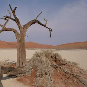 Hiddenvlei, Namib Desert