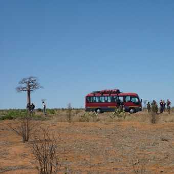 Baobabs between Isalo and Tulear