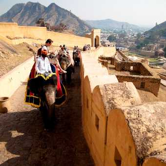 The ascent to Amber Palace by elephant.  Jaipur