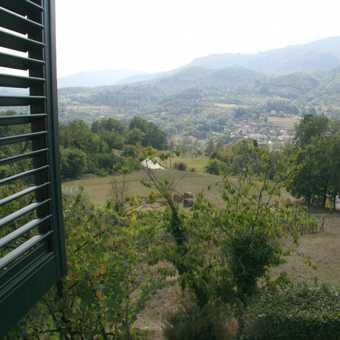 Braccicorti Window