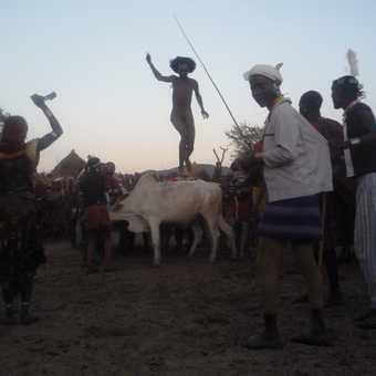 jumping the bulls