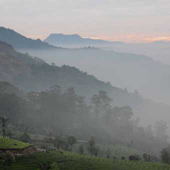 Early Morning in Munnar