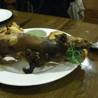 Dinner aka a guinea pig!