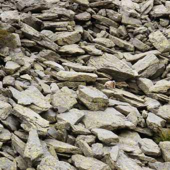 Spot the marmot
