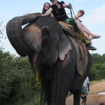 Elephant refuelling