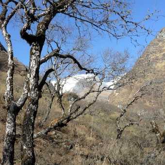 Dry habitat - Modi Khola valley