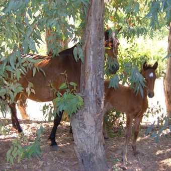 Mare & foal-Algamitas river walk