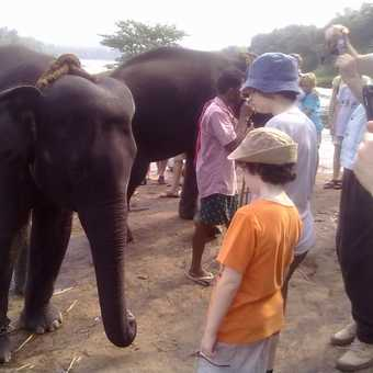 KIDS WATCHING THE ELEPHANT