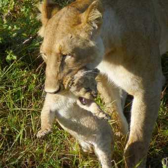gentle mother