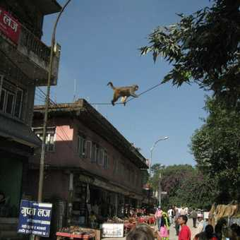 What we didn't see in Chitwan.