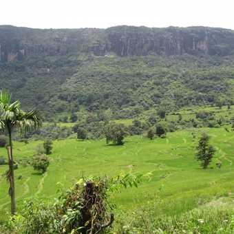 Lush Paddy fields that we walked through