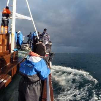 Orca search
