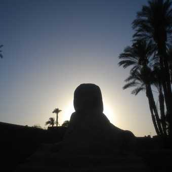 A Luxor Temple Sphinx at sunset