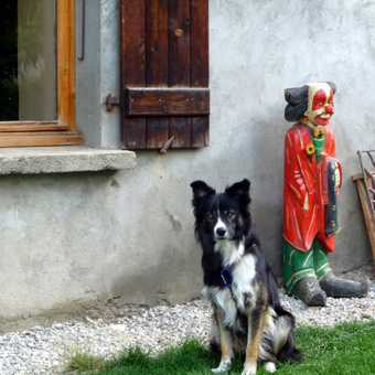 Dog outside French home