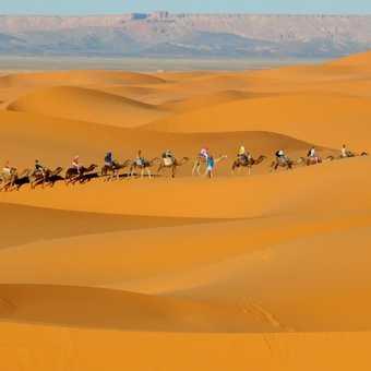 Camel Trekking of Morocco with cultura Travelmarocco
