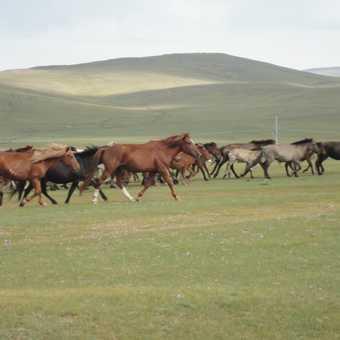 HORSES GALLOP ALONGSIDE US