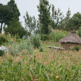 local scenery in uganda