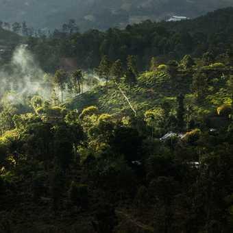 Tea fields in Ella