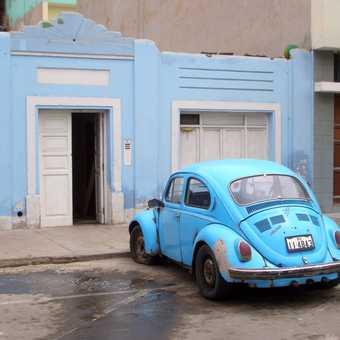 Latin Herbie