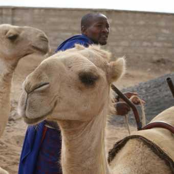 Camel ride at Maasai village