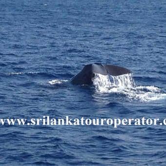 whale watching Mirissa beach