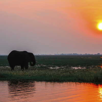 Elephant at sunset at Chobe