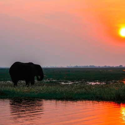 Elephant at sunset at Chobe