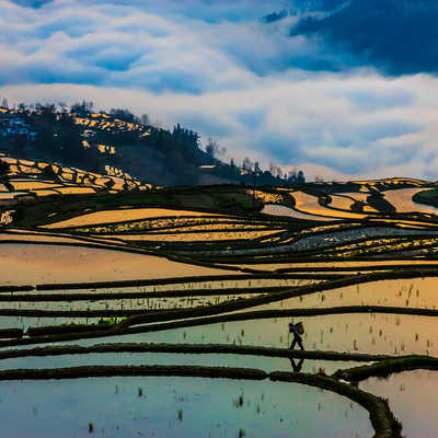 Views of Rice Terraces, Yuanyang County