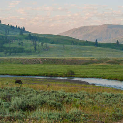 Lamar Valley in Yellowstone National Park at dawn with a bison present