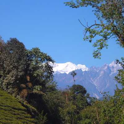 View of Kabru from Temi Tea Estate, India