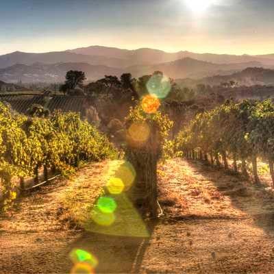 Sunrise overlooking a vineyard