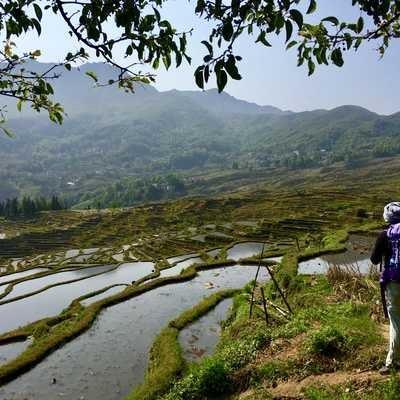 Walking through rice terraces in Yuangyang Country, Yunnan, China