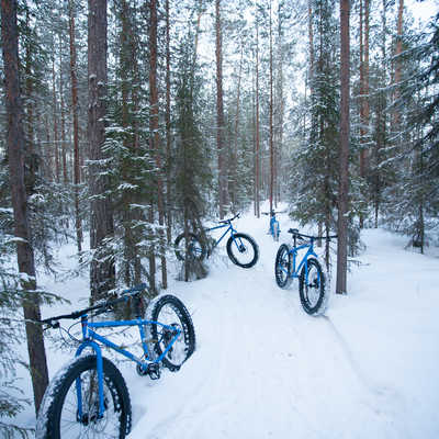 Fat bike forest