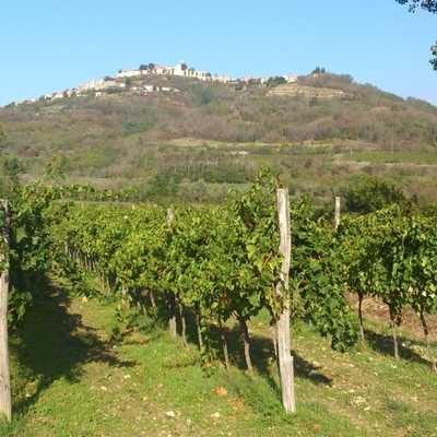 W07IS - Croatia - vines
