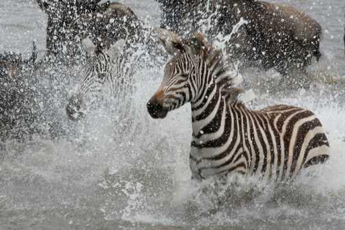 Mara River Crossing